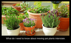 How to move pot plants interstate
